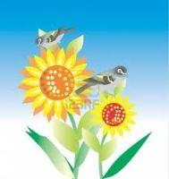 irds sunflowers