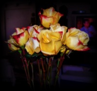 005-12-2012 Anniversary roses