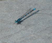Mr. Dragonfly