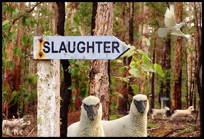 lamb to slaughter Activities to do with understanding roald dahl's short story.
