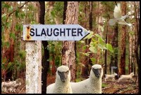 Lambs-2-Slaughter